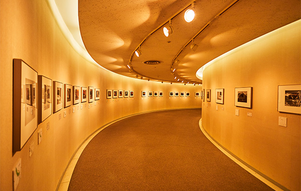 Gallery for Arts