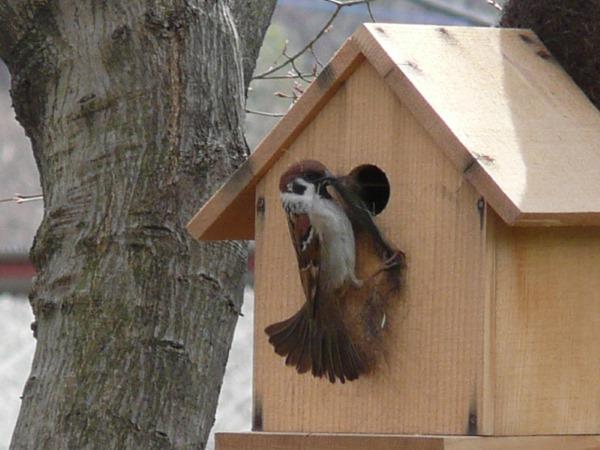 小鳥の巣箱を作ろう