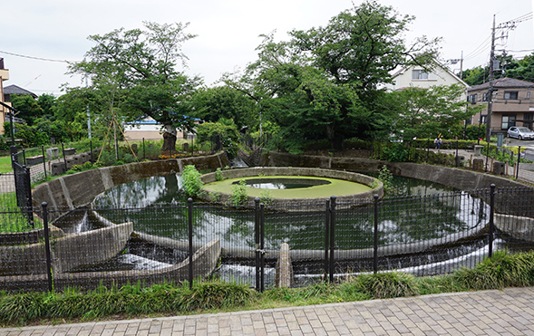 【新緑の季節】かわさき史跡めぐり ―桜と新緑の二ヶ領用水を撮りながら―
