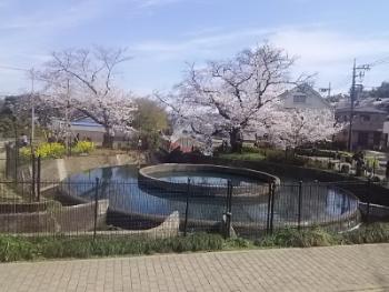 【桜の季節】かわさき史跡めぐり ―桜と新緑の二ヶ領用水を撮りながら―