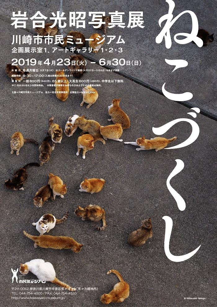 ギャラリーツアー【岩合光昭写真展 ねこづくし】